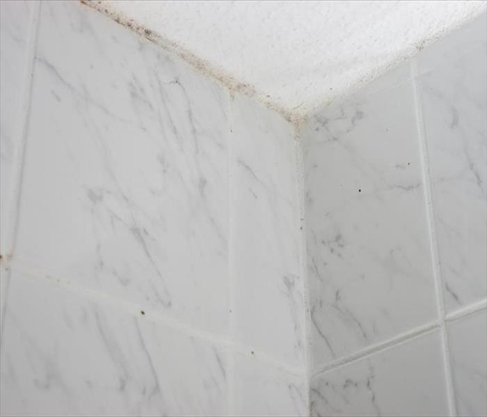 Mold Damage in Nashville