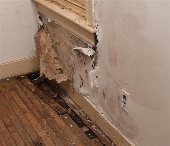 Water Damage Reasons to Hire Water Remediation Experts in Goodlettsville
