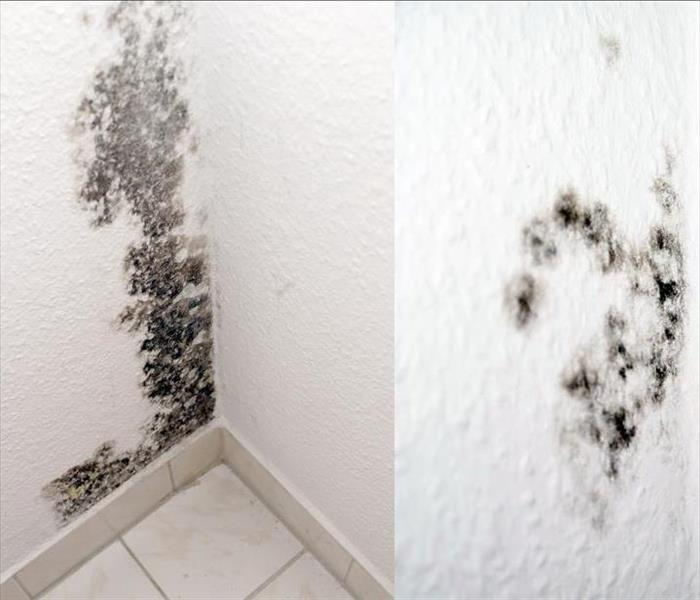 Mold Remediation Why It's So Important to Clean Up Mold Damage in Nashville