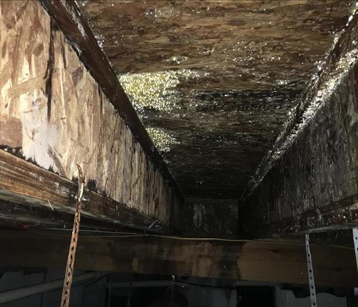 Mold Remediation Removing and Preventing Mold Damage in Nashville