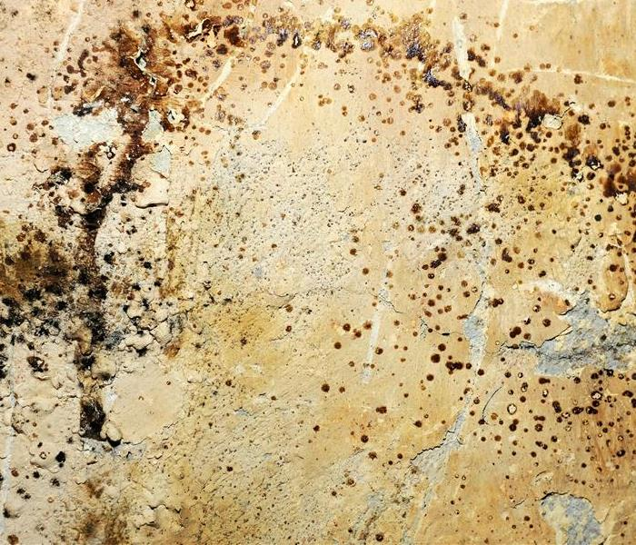 Mold Remediation What To Do When You Suspect Mold In Your Home