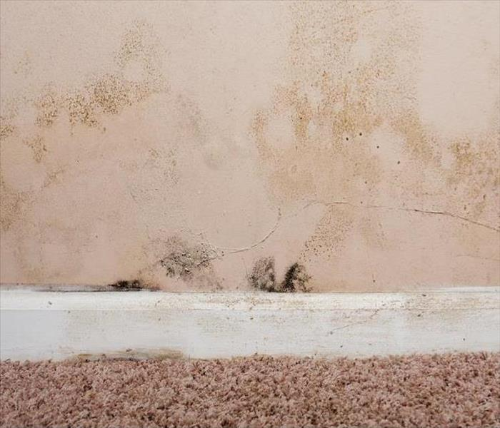 Mold Remediation Overcoming Mold Damage in Nashville