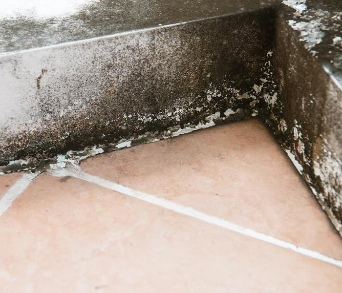 Commercial Prevent Commercial Damage in Goodlettesville From Becoming a Mold Infestation